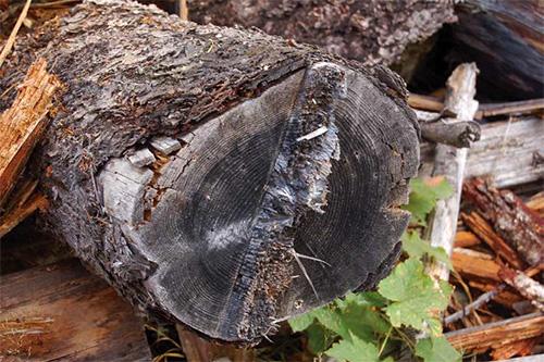 Logging & Sawmilling Journal - November 2017 - Salvage