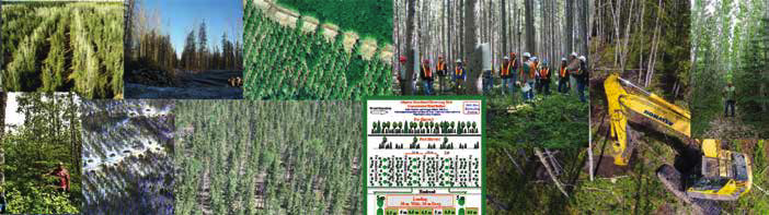 Partial harvest, commercial thinning and silviculture strategies available to the industry for managed forests