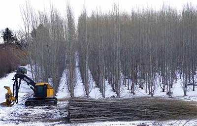Alberta Innovates aims to raise profile of tree farming